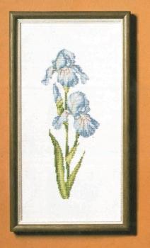 4651-1 Iris (Blue)