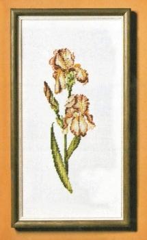 4653-2 Iris (Red)