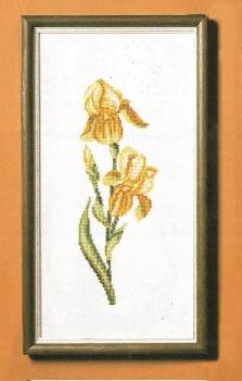 4652-1 Iris (Yellow)